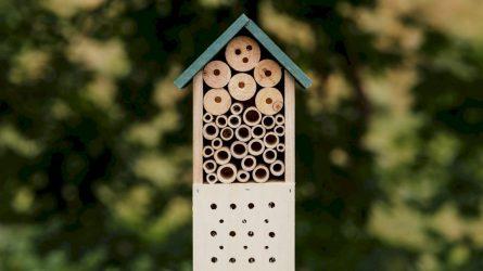 Šalia Vilnelės – penki nauji viešbučiai vabzdžiams