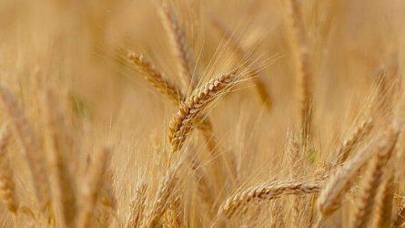 Prasidėjo javapjūtė: kombainai bei kilta žemės ūkio technika turi būti tinkamai paruošta