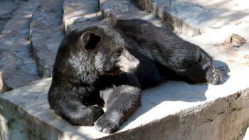 Lietuvos zoologijos sodo rekonstrukcijos startas: pasirašyta sutartis su rangovu
