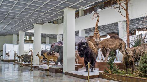 Gimtadienį švenčiančiame Kauno zoologijos muziejuje – nauji eksponatai