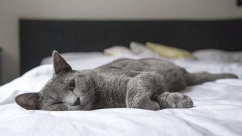 Kačių konservai - sveikatos ir gražaus kailio paslaptis