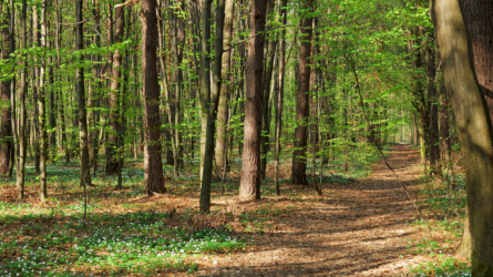 Nacionalinis susitarimas dėl miškų nuo pamatinių tikslų pereina į vizijos etapą