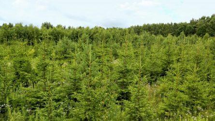 Jaunuolynus būtina ugdyti, kad miškai būtų sveiki ir biologiškai įvairūs