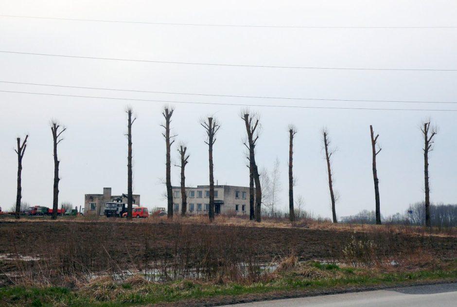 Dėl elektros linijų saugumo reikalavimų Vilniuje bus genimi medžiai