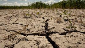 """Aplinkos viceministrė apie Jungtinių Tautų klimato kaitos ataskaitą: """"Mokslinė tikrovė nepalieka teisės atidėlioti Žaliąjį kursą"""""""