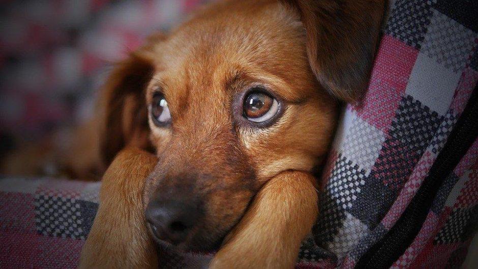 Ar reikalingos gerosios bakterijos šunims?